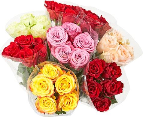 Roses premium d'Equateur