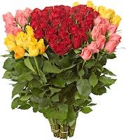 Roses premium