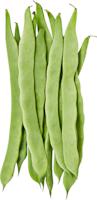 Haricots à rames coco
